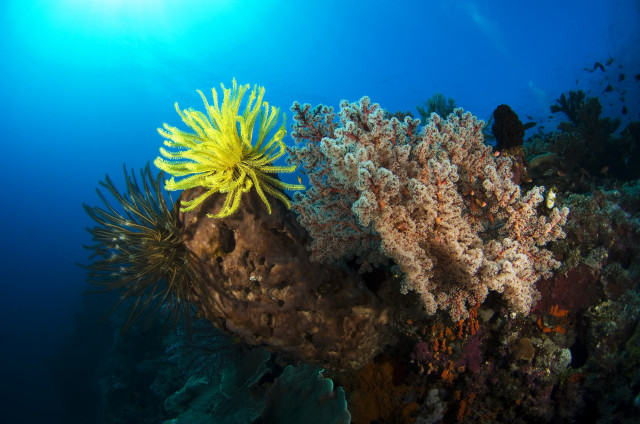 Crinoid and Softcoral